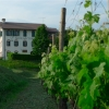 Aquila del Torre - Blick vom Garten
