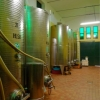 Vini Zorzon - Weinkeller 1