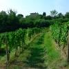 Castello di Buttrio - Blick vom Weingarten