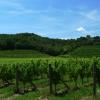 Il Roncal - Weingarten