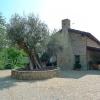 Lis Fadis - Olivenbaum